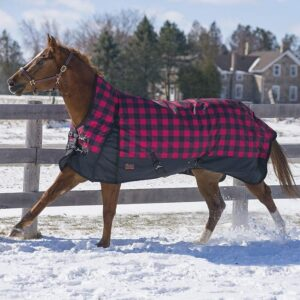 Canadian Horsewear Turnout Blanket 19062 60